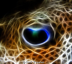Eye of a puffer....Enjoy! by Rick Tegeler