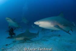 Playa del Carmen bull shark dive awesom!!!! by Javier Sandoval