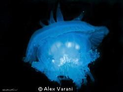 cephea cephea - blue fantasy by Alex Varani