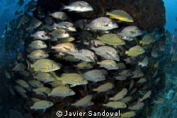fish arround reef Isla Mujeres by Javier Sandoval