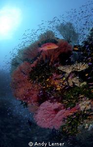 Reef scene in Fiji. by Andy Lerner