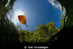 Alone in the Sea.. by Tunc Yavuzdogan