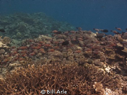 Coral sea. by Bill Arle