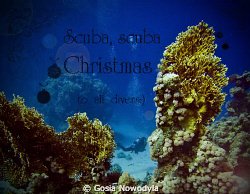 Scuba, Merry Christmas to all divers:)  by Gosia Nowodyla