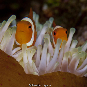 A good photo opportunity with the white tentacles but thi... by Reidar Opem