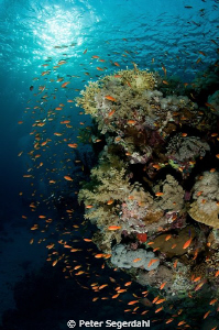 Shark reef and Yolanda More than just toilets! by Peter Segerdahl
