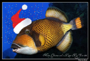 I wish you all the best in 2011. Many wonderful and safe ... by Charly Kotnik