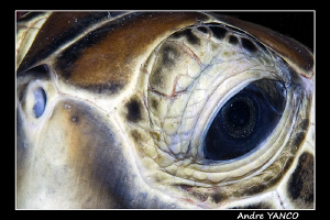 Eye of the beholder :)  I tried to create an unusal look ... by Andre Yanco