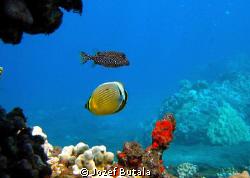 aquarium, La perus bay. by Jozef Butala