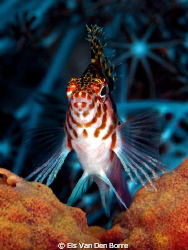 I'm the King of the reef by Els Van Den Borre