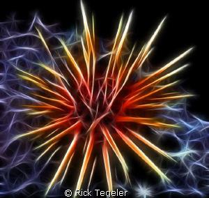 Urchin... Enjoy! by Rick Tegeler