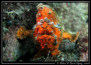 Underwater security :-) by Raoul Caprez