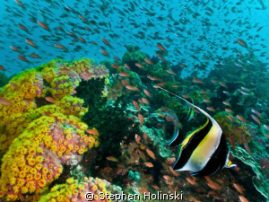 Dive site: Beatrice.  Anilao, Philippines.  Current was p... by Stephen Holinski