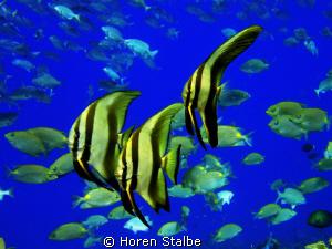 Fish assortie! by Horen Stalbe