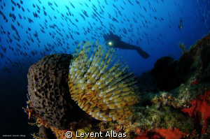 Tube Form, SmallReef Bodrum. by Levent Albas