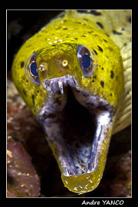 Grawlllll !!!  Don't make me bite you !!!   Nikon D200+60... by Andre Yanco
