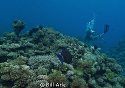 Dive leader, Nick from Spoilsport. by Bill Arle