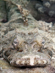 Crocodile fish Number 2. by Andrew Macleod