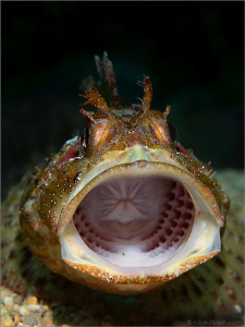"""""""ROARR"""" This must be an unpleasant sight for a small fish... by Roland Bach"""