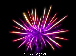 Urchin........enjoy! by Rick Tegeler