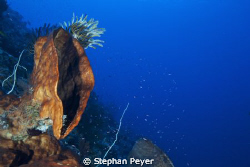 The Cry!