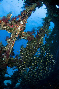 Shot from inside the wreck of the Carnatic with a school ... by Paul Colley