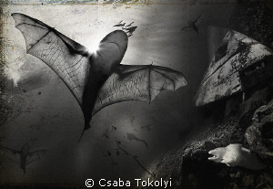 A fantasy scene where at bat-winged sharks roam about ove... by Csaba Tokolyi