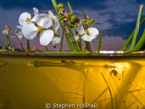 Shot in the same series as the last entry.  Canon G10, du... by Stephen Holinski