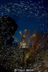 Taken in Raja Ampat by Nazir Amin