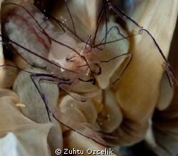 Big Brain by Zuhtu Ozcelik