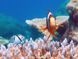 Great Barrier Outer Reef (Milln Reef), Canon Ixus 90 by Andy Esgrove