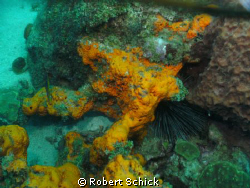Orange coral by Robert Schick