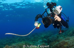 George and the Sea snake. by Joshua Tappert