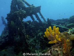 Good growth on this wreck by Melanie Daneluk