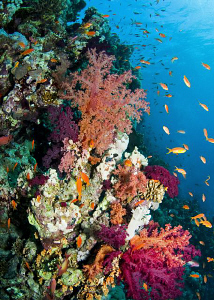 Soft corals on Jackson Reef by Paul Colley