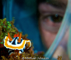 Dive Buddy checking out the Nudi..... by Michael Johnson