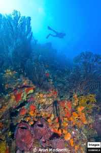 Hanging out on the reef.  Craters edge, where Atlantic m... by Arun Madisetti