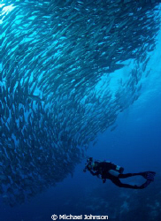 Schooling Jacks off the Island of Bohol in the Philippines by Michael Johnson