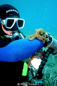 While diving off Corfu my dive buddy found this little oc... by Mark Dobson