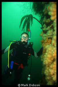 Diving off the Farne Islands  UK 2006. Kelp and dead men'... by Mark Dobson