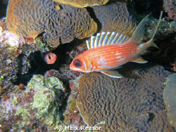 Squirrelfish eyeing each other.  Taken with Sea Life DC 8... by Mark Reasor