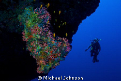 Diver off a wall in the Maldives by Michael Johnson