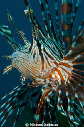 Lyon Fish near Bohol in the Philippines by Michael Johnson