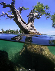 Mangrove in Padre Burgos by Jean-Louis Vaucher