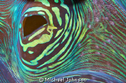 Up close to a Giant Clam in the Philppines by Michael Johnson