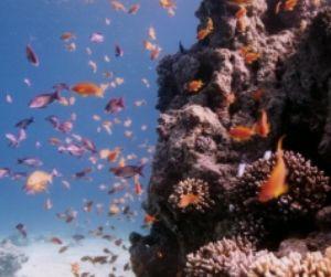 Wreck Fish, Eilat, Red Sea, Ikelite Housing, Pentax SF10,... by Philip Norris