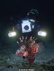 Photo taken at the Octopus dive-site, Musandam, Northern ... by Alexander Nikolaev