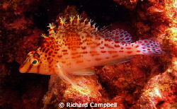 flowler-fins--sealife DC1000... by Richard Campbell