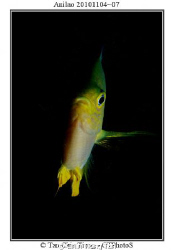 A fish in Philippine Sea, one strobe. by Chin Tiong Tan