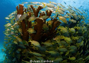 reef by Juan Cardona